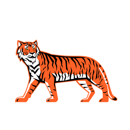 Illustration pour Sports mascot icon illustration of a full body Bay of Bengal tiger, a Mainland Asian tiger walking viewed from  side on isolated background in retro style. - image libre de droit