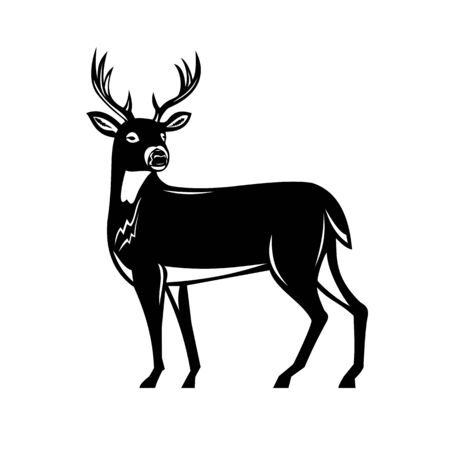 Illustration for Retro woodcut style illustration of a white-tailed buck deer, whitetail or Virginia deer, a medium-sized deer native to North and South America side view on isolated background done black and white. - Royalty Free Image