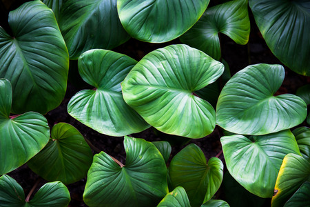 Photo for Green plant - Royalty Free Image