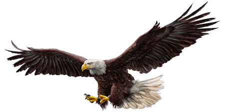 Illustration pour Bald eagle flying hand draw and paint on white background vector illustration. - image libre de droit