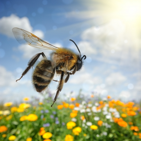 Bee flying over colorful flower field at summer day