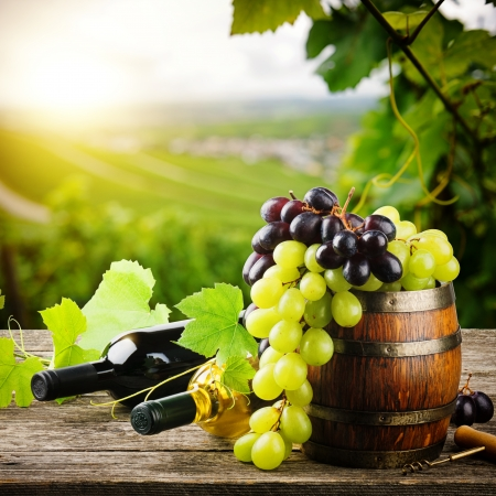 Photo pour Bottles of red and white wine with fresh grape on vineyard background - image libre de droit