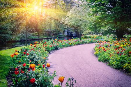 Photo pour Spring landscape with colorful tulips. Keukenhof garden, Netherlands - image libre de droit