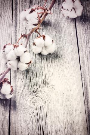 Foto de Branch of ripe cotton bolls on old wood background - Imagen libre de derechos