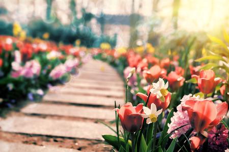 Photo pour Path in spring park surrounded by multicolor flowers - image libre de droit