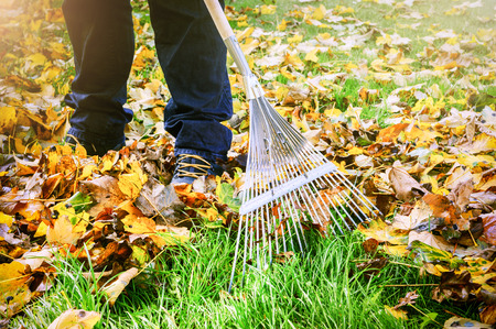 Photo pour Gardener raking fall leaves in garden. Nature background - image libre de droit