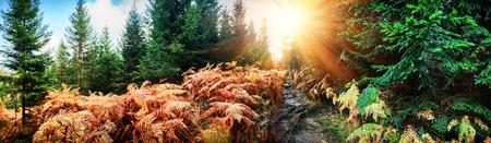 Foto de Panoramic autumn landscape with forest path. Fall nature background - Imagen libre de derechos