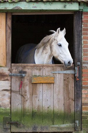 White horse behind a wooden stable door mural