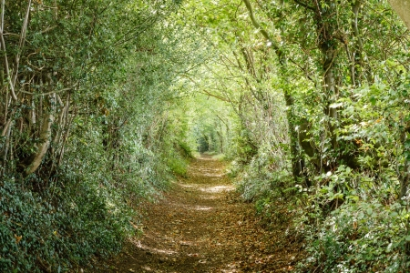 Avenue of trees in the Britsh countryside