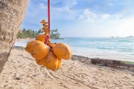 Foto de Cluster of king coconut hanging from palm tree with beautiful sandy beach in background. - Imagen libre de derechos