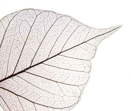Dry leaf detail texture in front to light