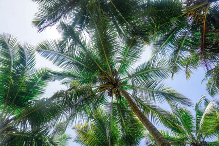 Photo for Thicket of green palm trees - Royalty Free Image