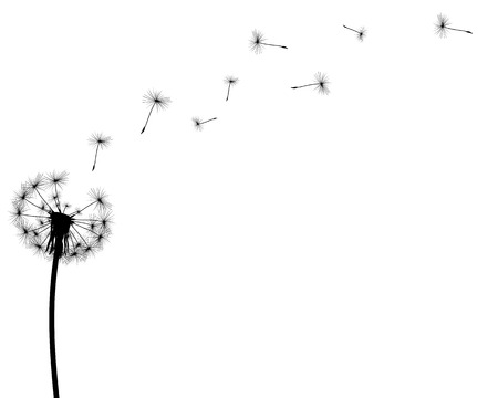 Illustration pour black silhouette with flying dandelion buds on a white background - image libre de droit
