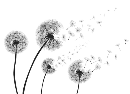 Foto de Abstract dandelions with flying seeds. - Imagen libre de derechos
