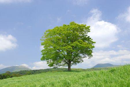 Foto de Big tree - Imagen libre de derechos