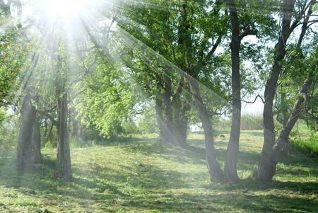 Photo pour Sunshine - image libre de droit