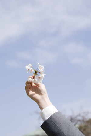 Hand of schoolgirl with cherry blossoms