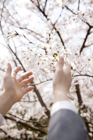 Hand of high school girls that reach out to Sakura