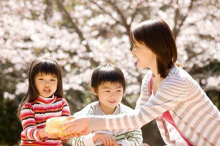Parent and child have a cherry blossom viewing