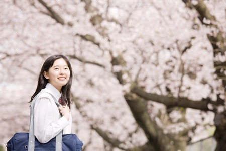Middle school girls are laughing under the cherry blossoms