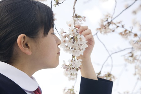 Middle school girls to smell the scent of cherry blossoms