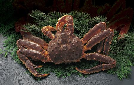 Foto de Active-king crab - Imagen libre de derechos
