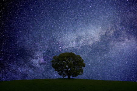 Photo for Grassland and trees and starry sky - Royalty Free Image