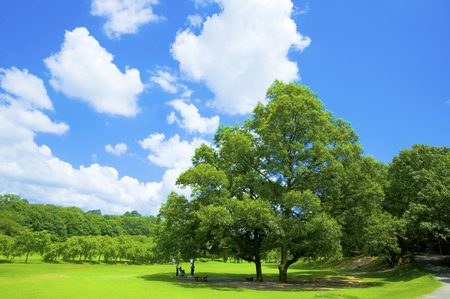 Photo for One trees and blue sky - Royalty Free Image