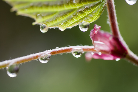 After the rain of the Dogwood