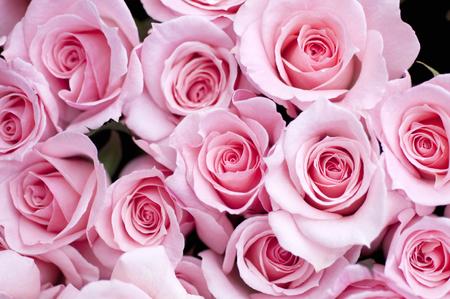 Photo pour Pink Roses - image libre de droit