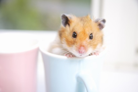 Photo for Mug in hamster - Royalty Free Image