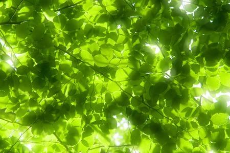 Photo pour Sunbeams - image libre de droit