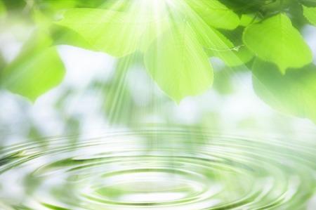 Photo pour Ripples and fresh green - image libre de droit