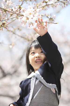 Elementary school students touch the cherry blossoms women
