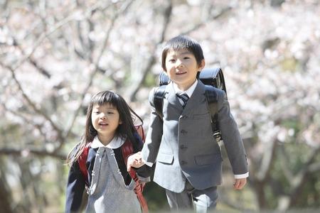Elementary school men and women who walk under the cherry tree