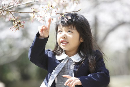 Elementary school students touch the petals of cherry blossoms women