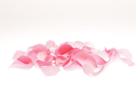 Photo pour Rose petals - image libre de droit