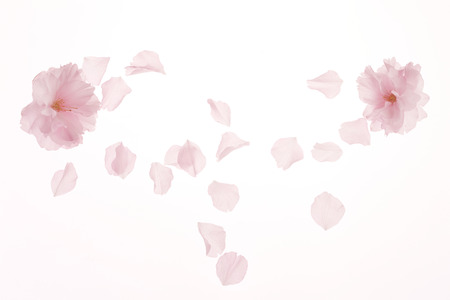 Photo for Blossom - Royalty Free Image