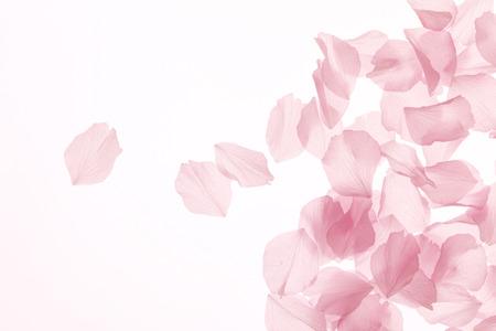 Photo pour Blossom - image libre de droit