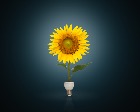 Photo for Bulb with beautiful sunflower,eco energy concept - Royalty Free Image