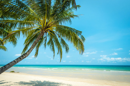 Photo for Coconut tree palm at the beautiful beach , Koh chang island in thailand - Royalty Free Image