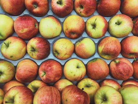 Foto de row of apples - Imagen libre de derechos
