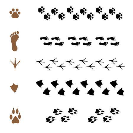 set of vector pattern brushes in the form of animal tracks
