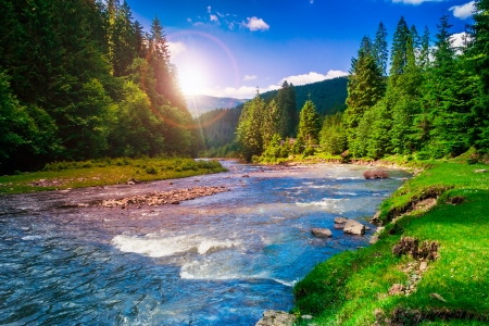 Photo for river near  forest at the foot of mountain  - Royalty Free Image
