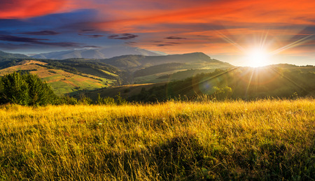 Foto de mountain summer landscape. meadow meadow with tall yellow grass and forests on hillside in sunset light - Imagen libre de derechos