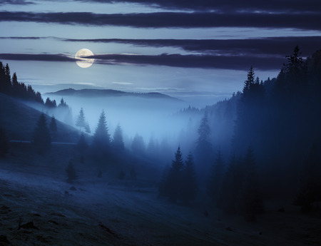 Photo pour early autumn landscape. fog from conifer forest surrounds the mountain top at night in full moon light - image libre de droit