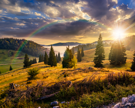 Photo for hillside with coniferous forest among the fog on a meadow under the rainbow  in mountains of Romania in evening light - Royalty Free Image