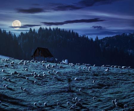 Foto de flock of sheep on the meadow on hillside near the fir forest in mountains of Romania at night in full moon light - Imagen libre de derechos