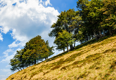 Photo for ancient beech forest on a grassy slope. beautiful early autumn scenery against a blue sky with huge cloud - Royalty Free Image