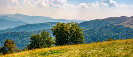 Photo for beautiful panorama of Carpathian mountains in early autumn weather. few beech tree tops behind the grassy slope of a ridge under sky with clouds - Royalty Free Image